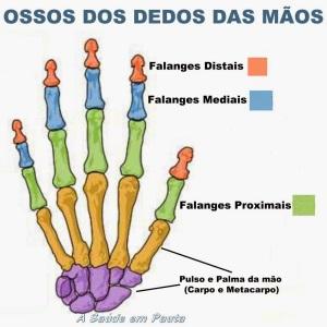 ossos da maos