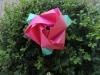 Aprenda a fazer uma rosa para suamãe